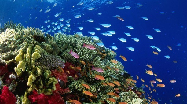 marine life on the Great Barrier Reef