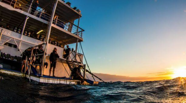 There is nothing quite like the amount of marine life you will see on a sunrise dive
