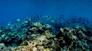 Cairns dive tours