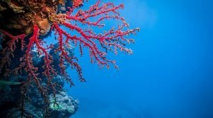 Magnificent coral gardens