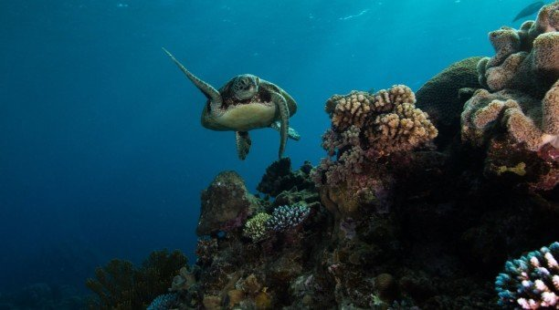 Explore Australia's Great Barrier Reef