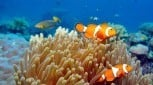 3 Day Snorkel Adventure and Kuranda