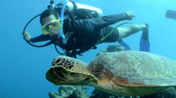 Referral Dive Course Diver and Turtle
