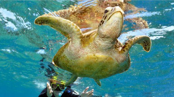 Great Barrier Reef snorkeling