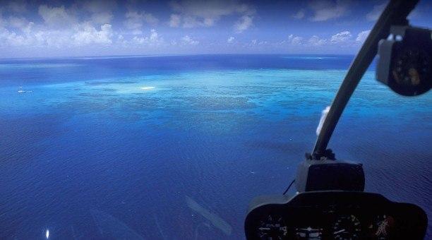 Reef Encounter Executive Tour