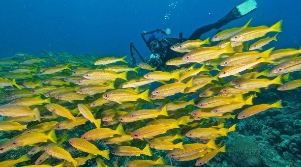 scuba dive the beautiful ribbon reefs