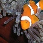 2 Day Top Deck Club Resort Dive