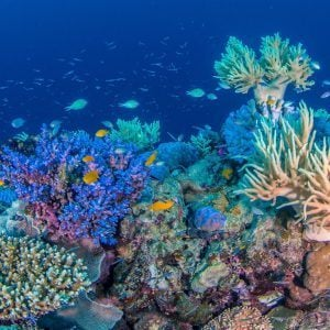 The Great Barrier Reef is the number one must see attraction in Australia, The Great Barrier Reef is the largest living thing & 1 of the seven natural wonders of the World book today