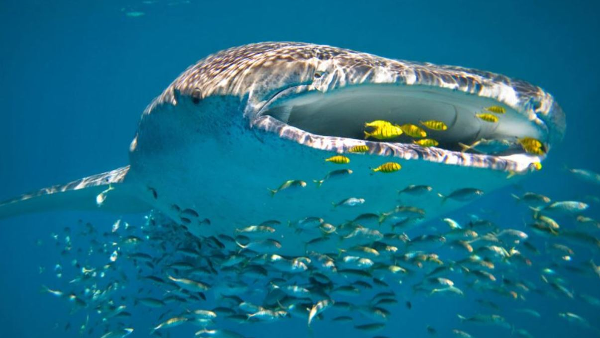 Ningaloo reef liveaboards - Ningaloo reef dive ...