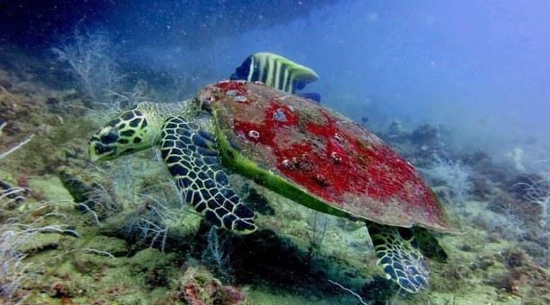 S.S Yongala Wreck Dive Australia