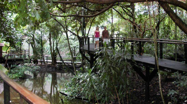 Daintree Rainforest boardwalk, North Queensland, Australia