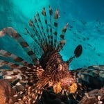 3 Day Reef Dive and Daintree Rainforest