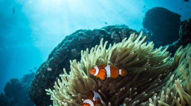 Coral Reef - Great Barrier Reef - Hot Getaways