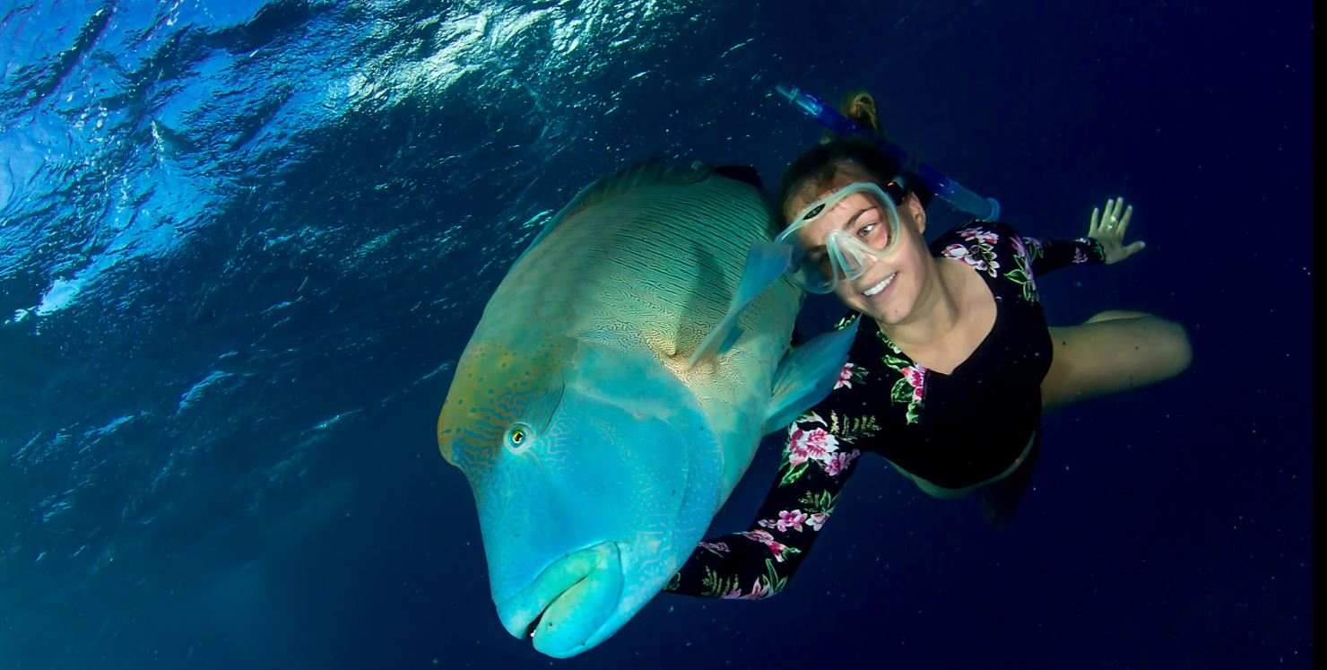 liveaboard snorkel