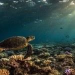 Top Deck Club Snorkel Getaway and Daintree Rainforest