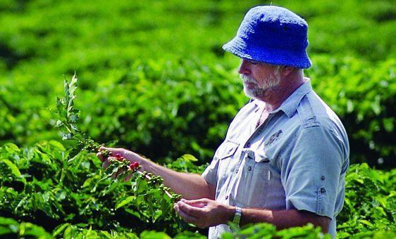 Skybury Coffee Plantation