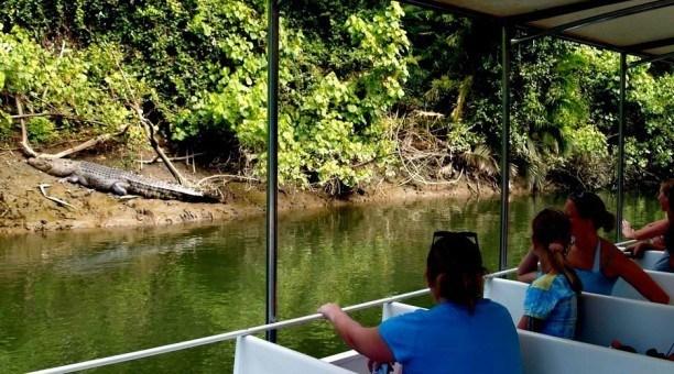 Daintree River Cruise, North Queensland Australia