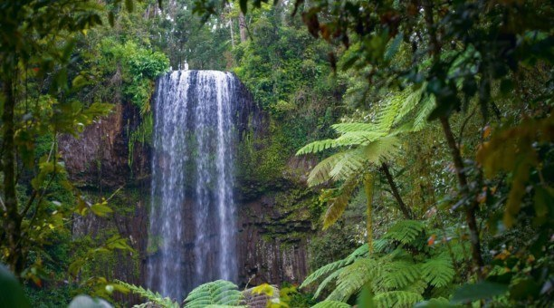 Millaa Millaa Falls, Atherton Tablelands, North Queensland Australia