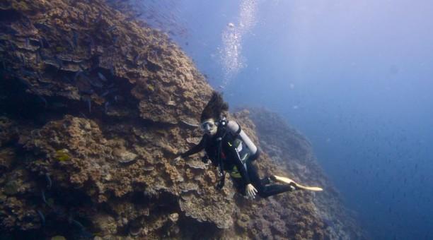 3 Day Referral Dive Course Cabin