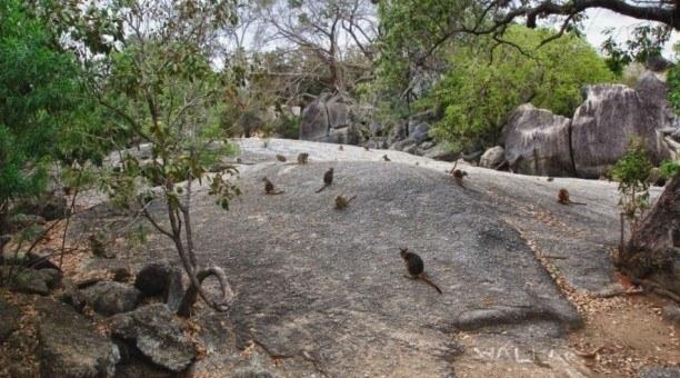 cairns night tour granite gorge