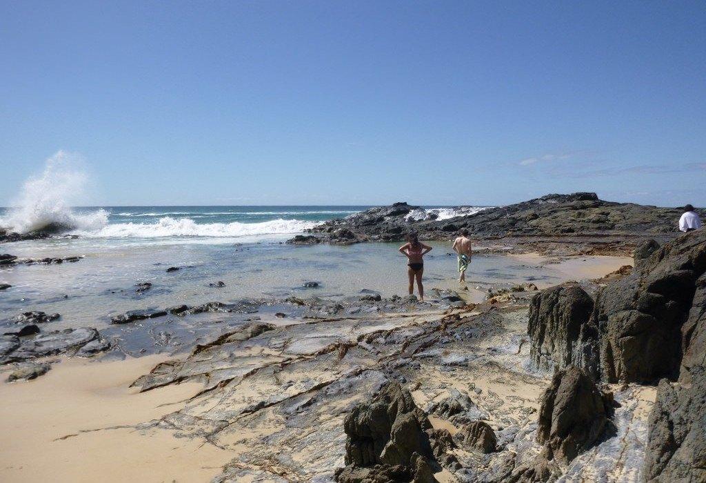 Cool Dingo Tour Fraser Island Qld