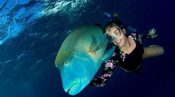 Snorkeling with Maori Wrasse