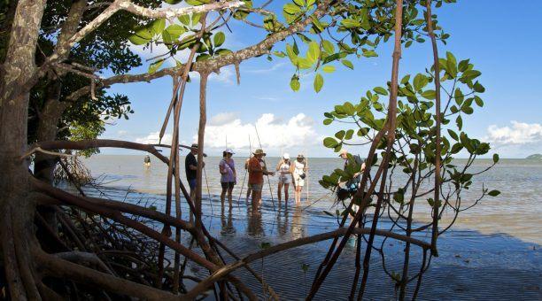 Kuku Yalanji Coastal Walk