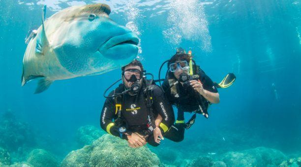 scuba divers with Maori Wrasse