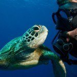 Learn To Scuba Dive 4 Day Course
