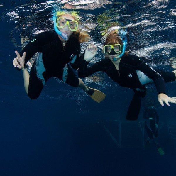 Great Barrier Reef Snorkeling, Cairns Australia