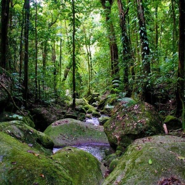 daintree world heritage rainforest