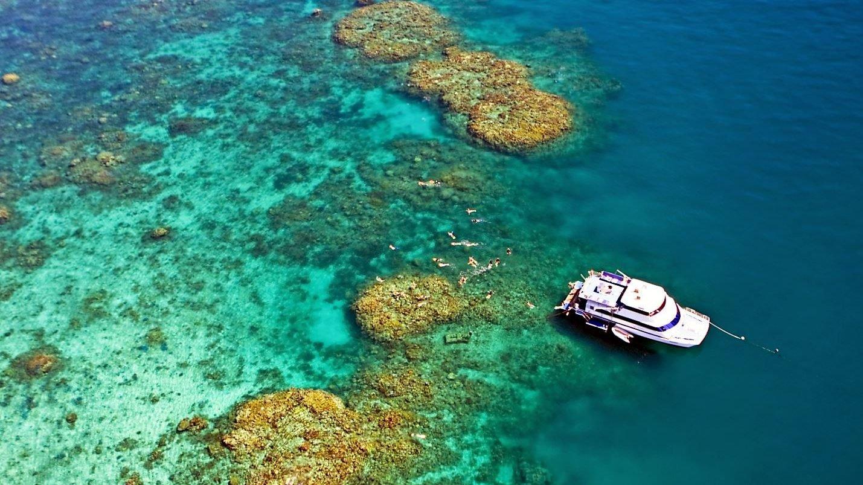 reefs day debacle - photo #12