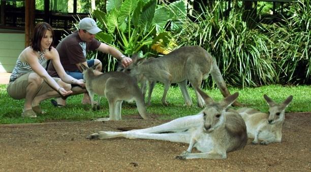 Wildlife Habitat Port Douglas,  North Queensland Australia