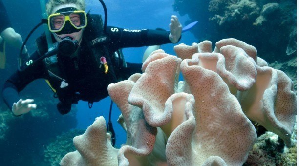 Great Barrier Reef Scuba dive