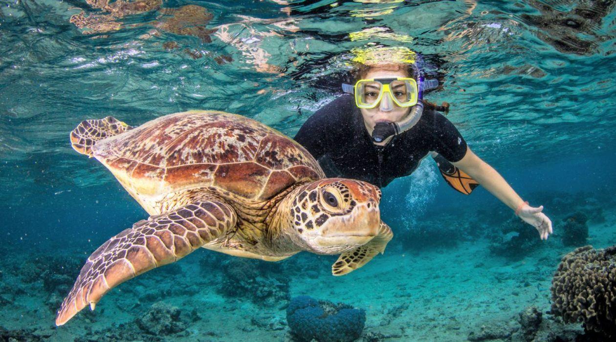 Best Barrier Reef Tours From Port Douglas