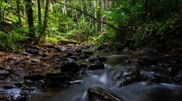 Daintree Rainforest Australia