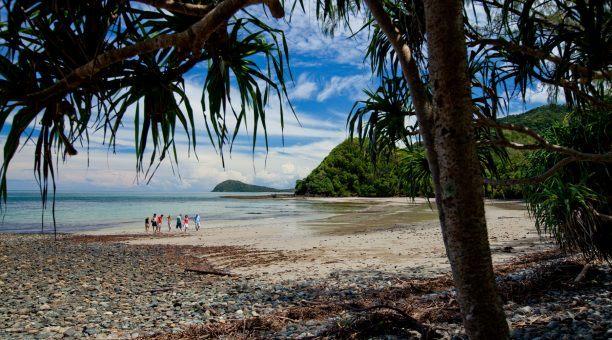 Wander Cape Tribulation beach where the rainforest meets the reef
