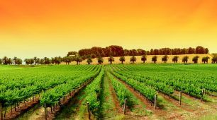 Food and Wine Tours Australia highlights the best of Australia's delicious produce and best wines.  Meet the local farmers and learn about growing food in Australia.  Share our passion for finding the best food and wine in Australia.  Take a cooking class and sample the authentic taste of Australia.  Visit farmer markets, sample world-class food and wine  Taste delicious locally-produced Australian specialties.  Discover more today.