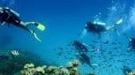 4 day Reef and Rainforest Scuba Dive Adventure