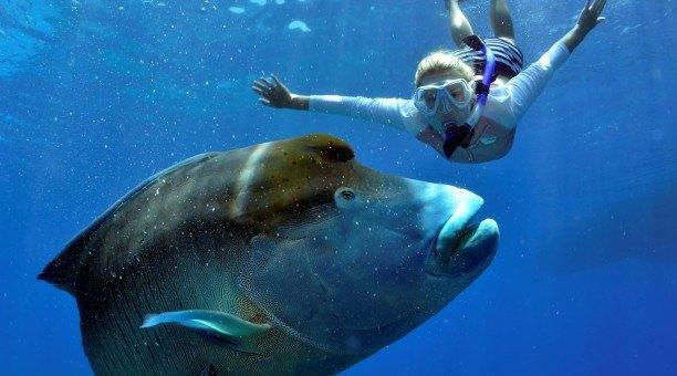 snorkel Great Barrier Reef Australia