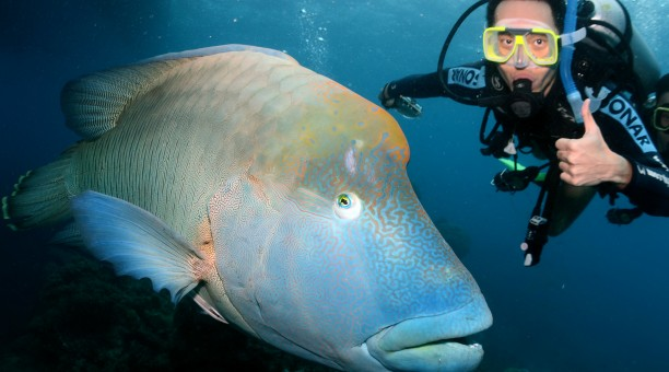 Referral Dive Course Diver