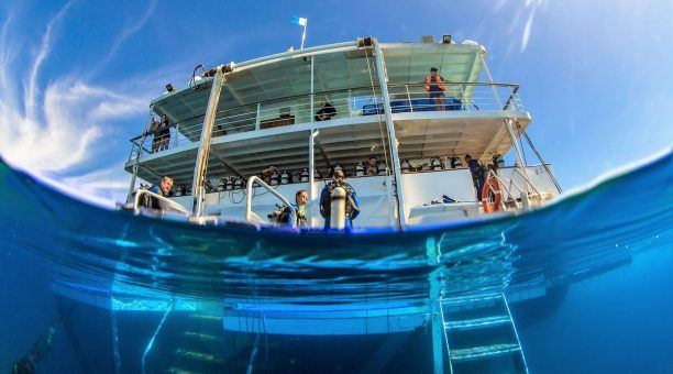 Reef Encounter Executive Tour
