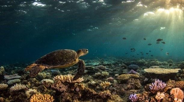 Top Deck Snorkel Getaway and Daintree Rainforest