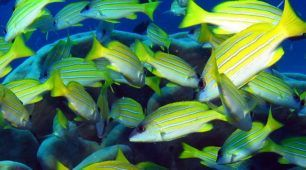 fish-great-barrier-reef