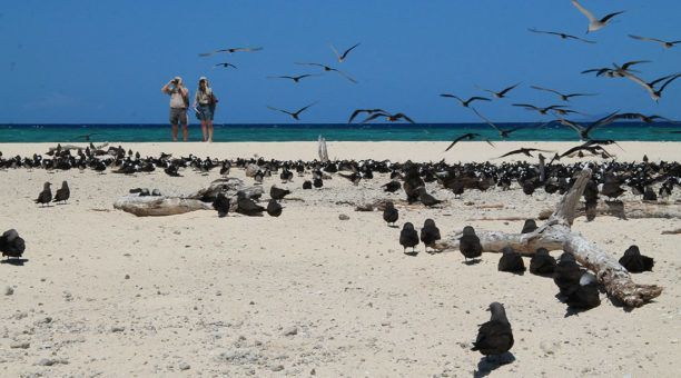 Michaelmas cay is an important breeding site for several species. It is also very important to sea bird migration