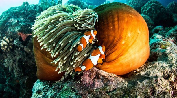 Explore the amazing underwater world of The Great Barrier Reef