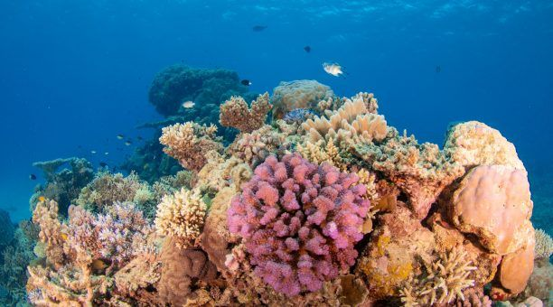 Great Barrier Reef Corals