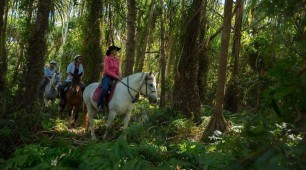 Horse riding tour, Cairns North Queensland Australia