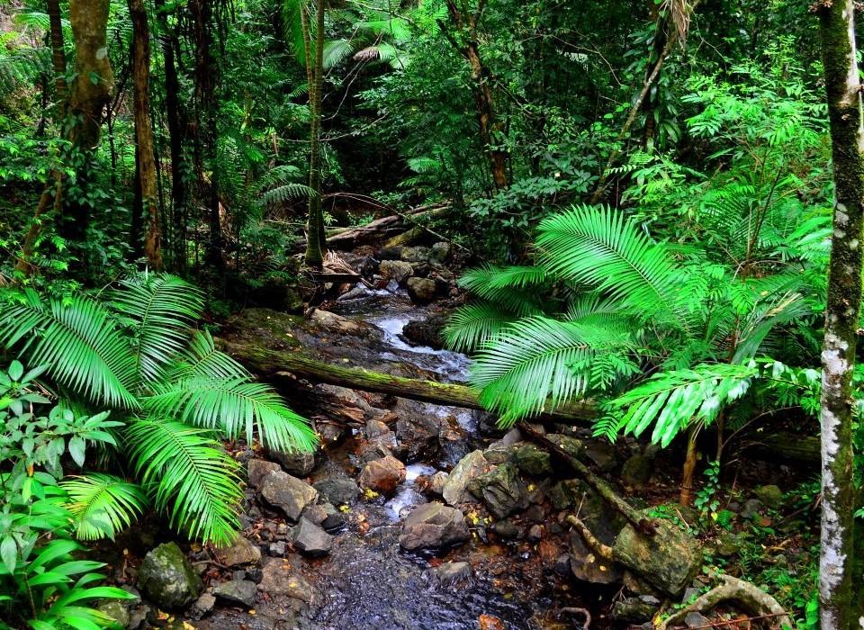 Cape Tribulation, North Queensland Australia