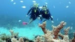 Learn To Scuba Dive: 3 Day Course